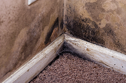 Stop mold growth after a flood.
